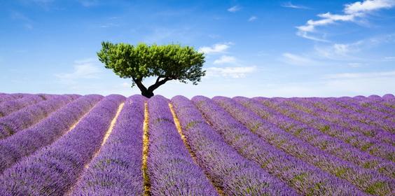 francuski online w Provence.
